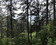маршруты в Крыму, Боткинская тропа