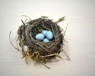 nest-1179492_1280