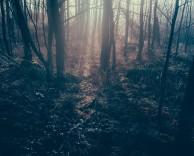 dark-forest-1081991_640